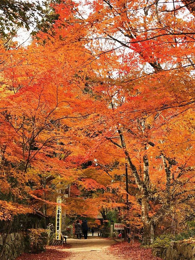 長寿寺(湖南三山)の紅葉