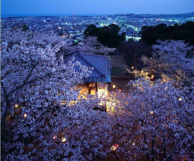 丹鶴城公園(新宮城跡)桜ライトアップ