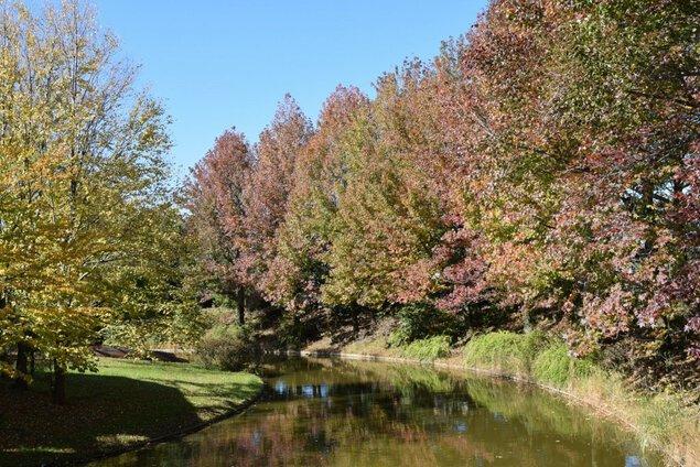 国営木曽三川公園アクアワールド水郷パークセンターの紅葉
