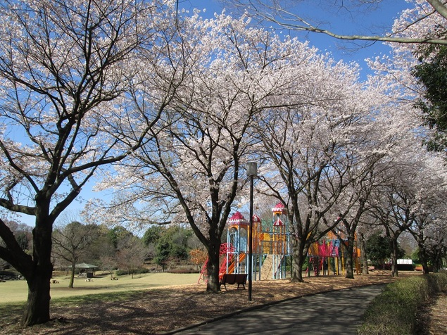 壬生町総合公園の桜
