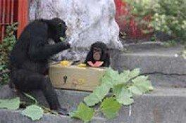 チンパンジーフェスティバル おやつDEフェス