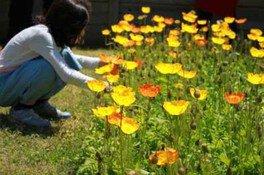 花摘み園(9月)