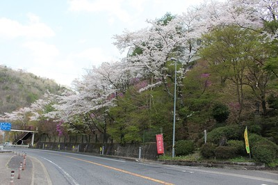 鬼岩公園の桜