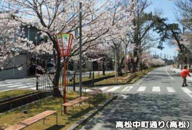 【桜・見ごろ】中町通り