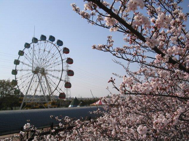 明石公園桜まつり