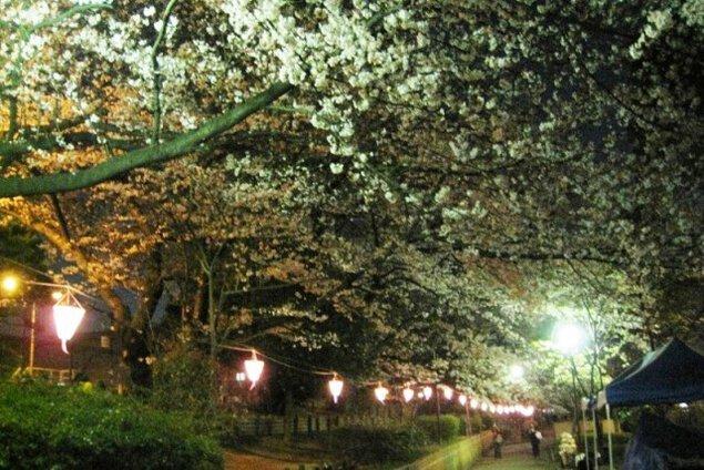 柴島浄水場桜並木通り抜け<中止となりました>