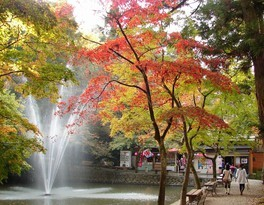 加茂山公園の紅葉