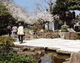 三笠公園の桜