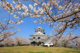 城山公園の桜(千葉県)