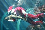 水族館のクリスマス (下田海中水族館)