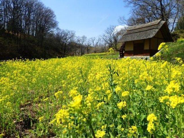 春の里山を歩く~オオムラサキと自然と人生~