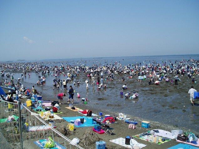 富津海岸潮の潮干狩り