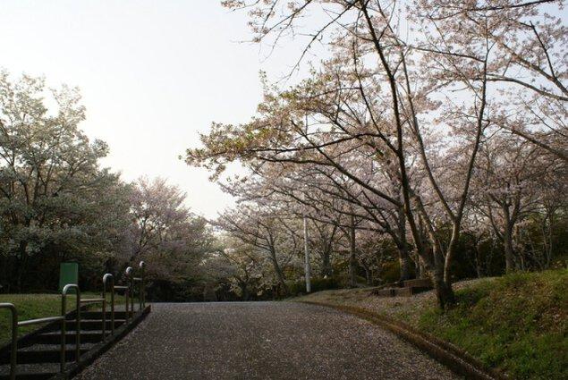 【桜・見ごろ】西之谷公園