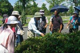 国営昭和記念公園 自然観察ツアー(7月)