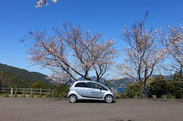 【桜・見ごろ】龍観山展望所