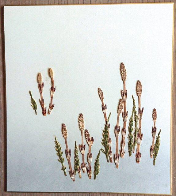 押花の色紙づくり・つくし編