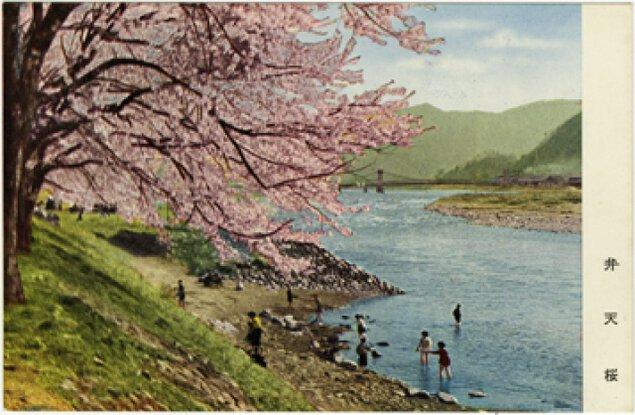 写真展「さくら咲く・ふくいの春~絵葉書でふりかえる~」
