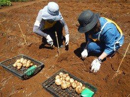 国営昭和記念公園 こもれびの里「ジャガイモ掘り体験」<中止となりました>