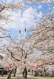 太田山公園の桜