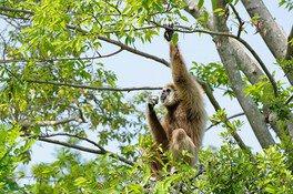 世界野生生物の日特別ガイド
