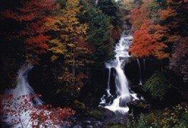 【紅葉・見ごろ】竜頭ノ滝