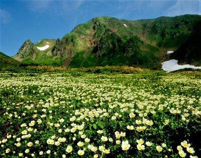 秋田駒ケ岳山開き