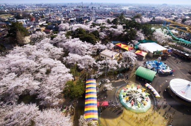 華蔵寺公園花まつり<中止となりました>