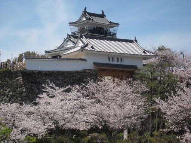 【桜・見ごろ】浜松城