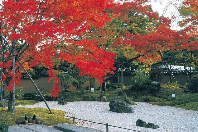 円通院・松島地区の紅葉