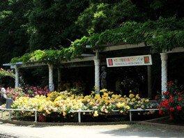 市川市動植物園 バラまつり