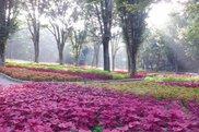 国営武蔵丘陵森林公園 こもれび花畑