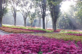 【花・見ごろ】国営武蔵丘陵森林公園 コリウス