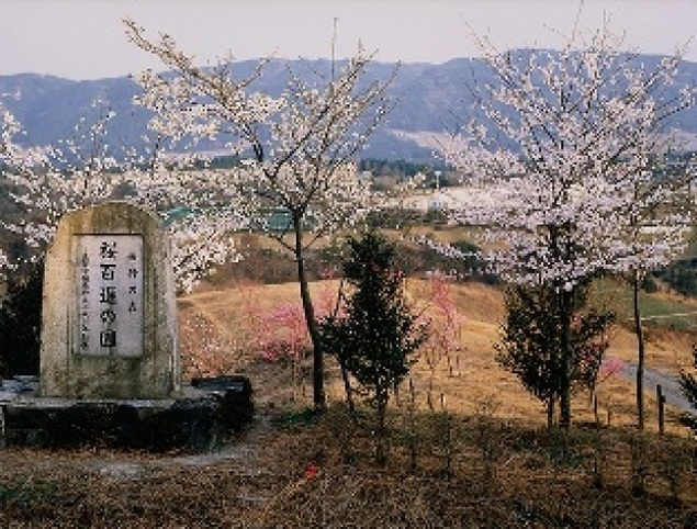 【桜・見ごろ】桜百選の園
