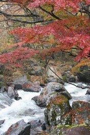 川上川渓谷「蒼ヶ島」の紅葉