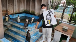 ペンギン教室