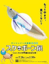 特別展「スケ・ボーン展~meets カメの甲羅はあばら骨~」