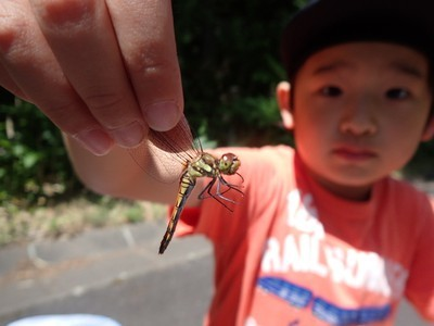 滝野の森昆虫野外博物館