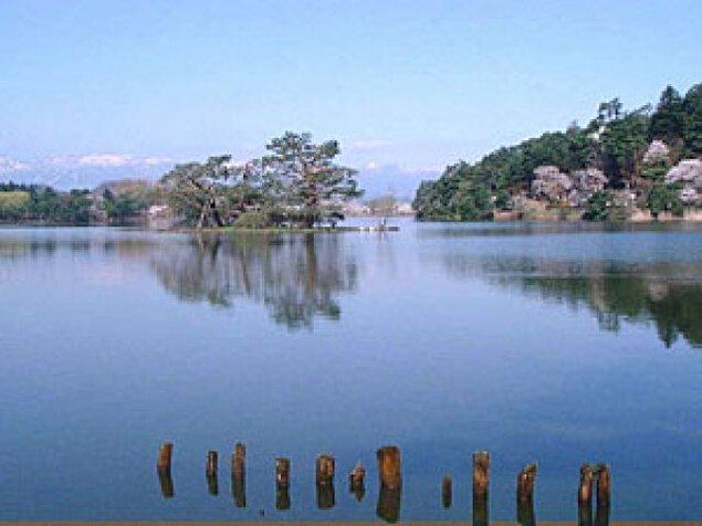 【桜・見ごろ】南湖公園