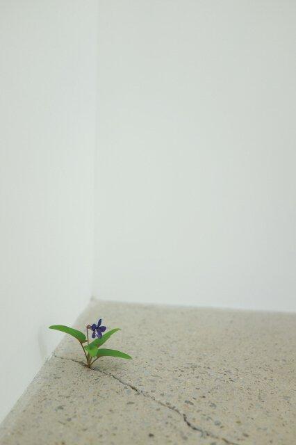 大宮盆栽美術館「さいたま市民の日」記念企画展