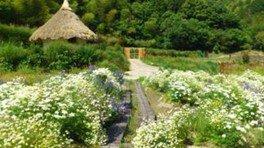 ツーギー谷のお花畑<早期終了となりました>