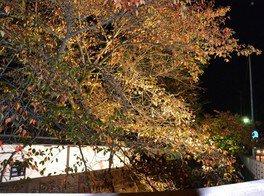 紅葉の江名子川ライトアップ