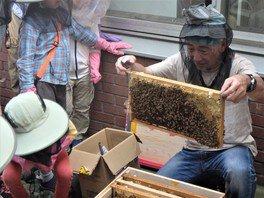 ハチの巣「内検」体験会!<中止となりました>