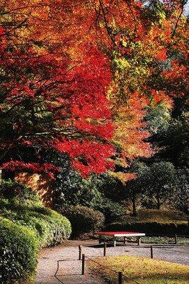 明月院の紅葉