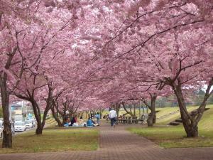 おやまニ千本桜まつり<中止となりました>