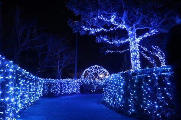 チューリップ公園KIRAKIRAミッション2021 砺波チューリップ公園