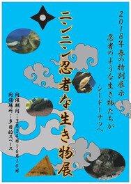 春の特別展「ニンニン 忍者な生き物展」