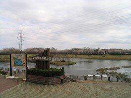 小畔水鳥の郷公園の桜