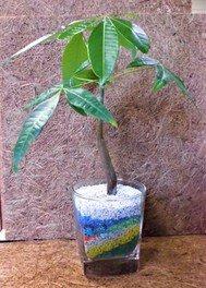 カラーサンドでミニ観葉植物を育てよう