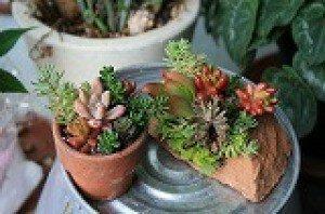かわいい多肉植物の寄せ植え体験
