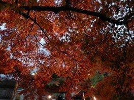 紅葉八幡宮 紅葉祭り